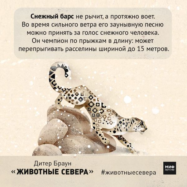 Захватывающие открытки из книги «Животные Севера» | Блог издательства «Манн, Иванов и Фербер»