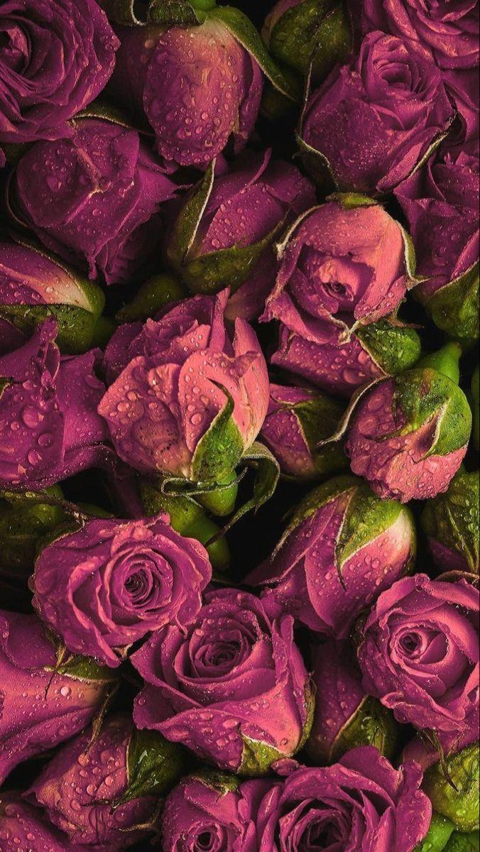 خلفيات ورود ورد In 2020 Flower Aesthetic Flower Phone Wallpaper Flowers Photography