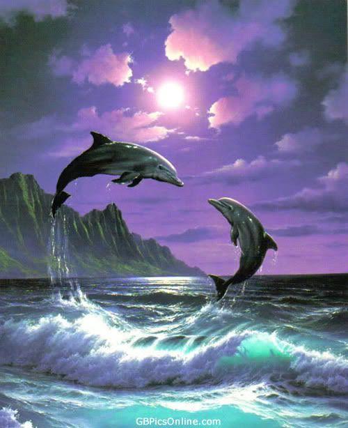 Delphin / Dolphin