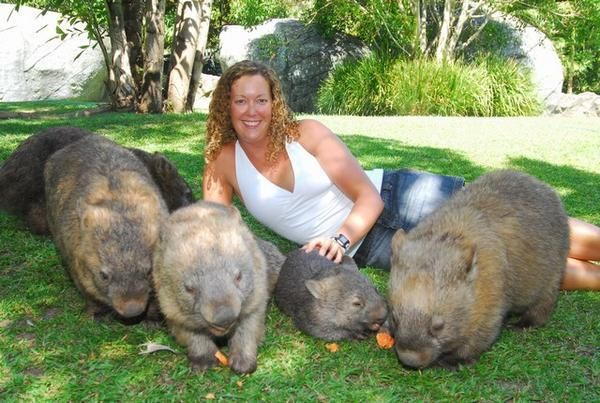 giant wombats wombat pinterest to be search and wombat. Black Bedroom Furniture Sets. Home Design Ideas