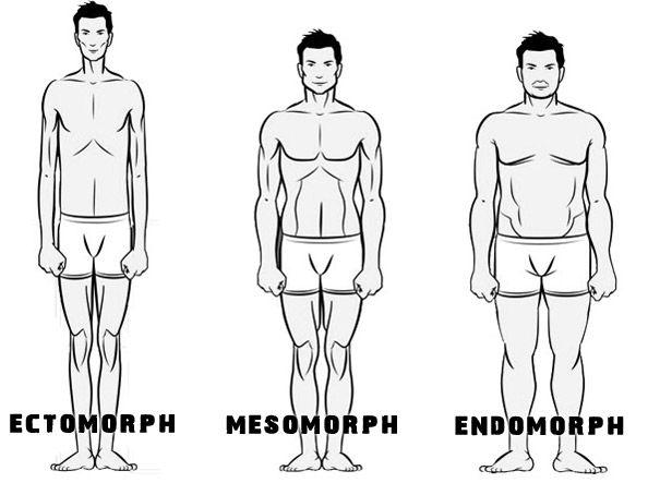 Die 3 Körpertypen