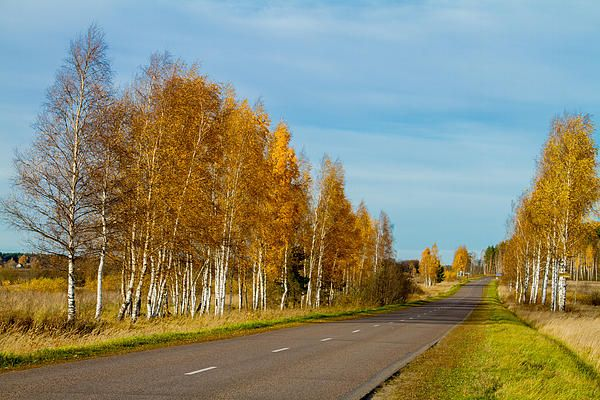 Road in gold