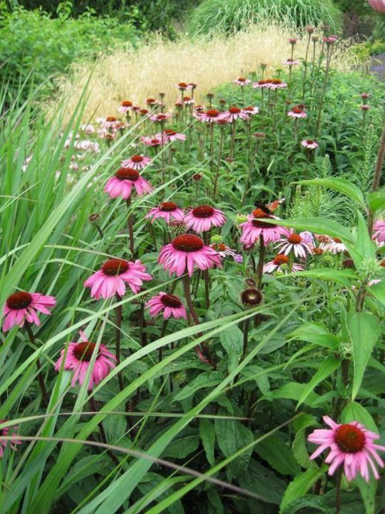 Best Native Plants Ohio Images On Pinterest Native Plants