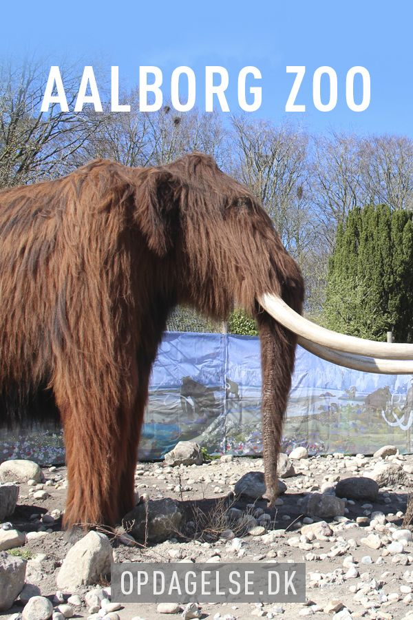 Back to the Ice Age at Aalborg Zoo in Denmark --- The post is in danish. Choose your own language in the bottom of the right sidebar
