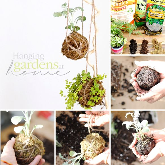 kokedama, garden, hanging, easy, tutorial, diy, plant