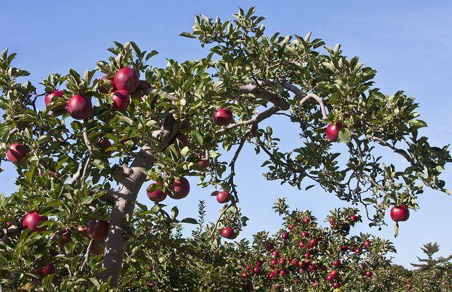 Je älter Die Frucht Desto Süßer Der Saft