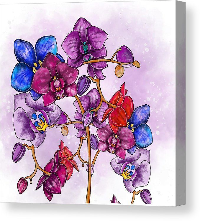 Colorful Orchids Canvas Print Canvas Art By Patricia Piotrak