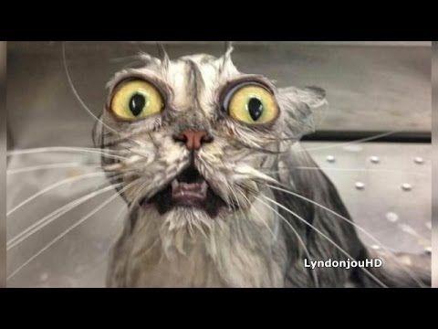 10 cosas que odian los gatos