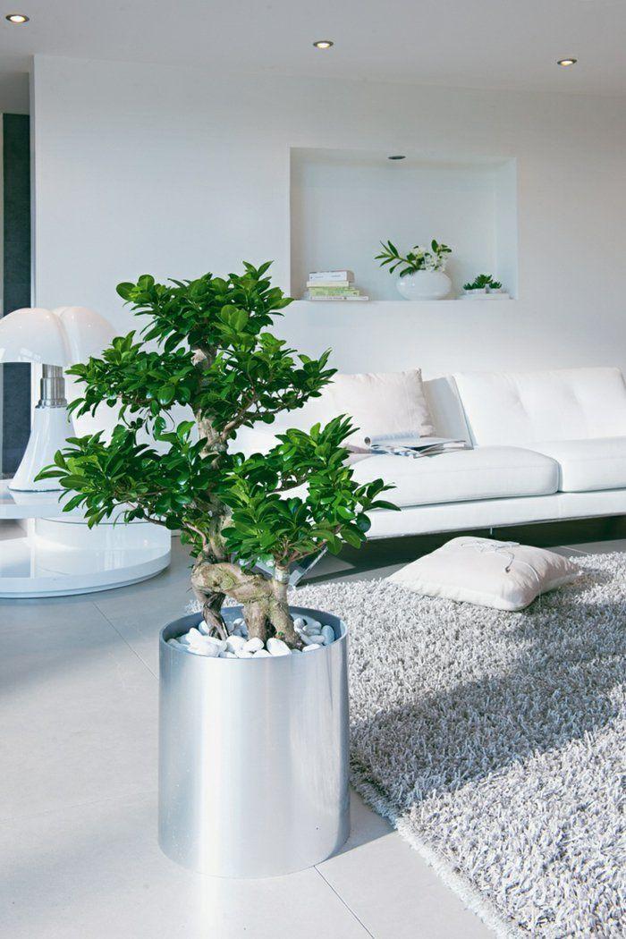 Benjamin Zimmerpflanze Mitten Im Wohnzimmer