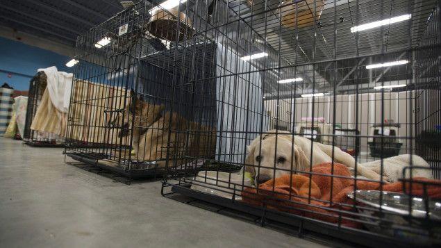 « La période des déménagements c'est long, c'est de juin à septembre et c'est une période pendant laquelle le nombre d'animaux que l'on reçoit triple », déplore la porte-parole de la Société pour la prévention de la cruauté envers les animaux (SPCA), Élise Desaulniers.