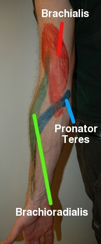Massage, cross frictionk,etc. for tennis elbow, golfer's elbow, etc.  Good & detailed info.  elbowmusclesdeep