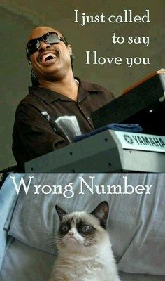 oh, grumpy cat