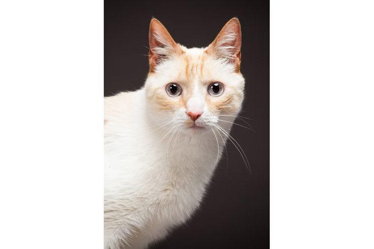 Chabadog - Vente en ligne d'accessoires et d'aliments pour chiens et chats. - Breeds