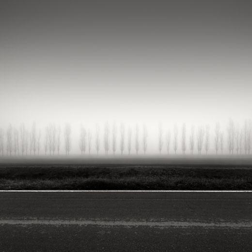 Rosario Civello - Trees on a Line - 2016
