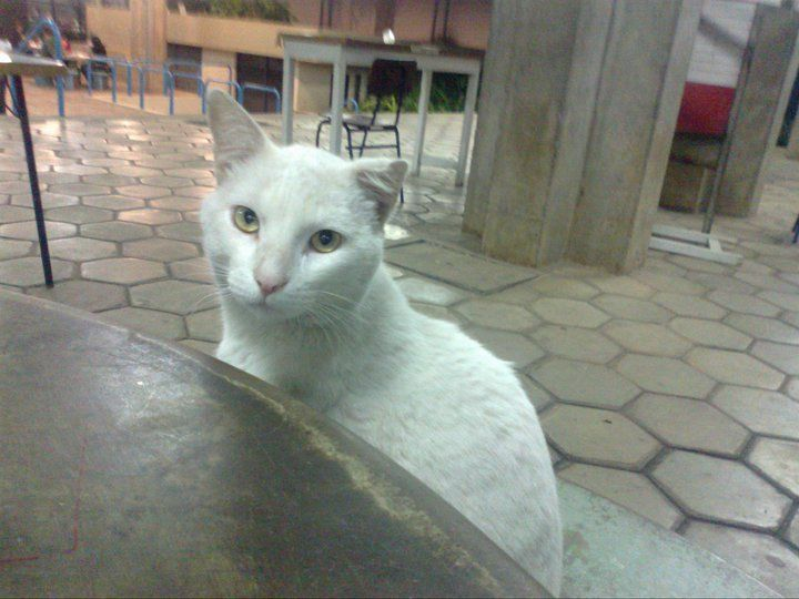 Em BH Projeto cuida de gatos abandonados na UFMG e procura voluntários - ANDA - Agência de Notícias de Direitos Animais