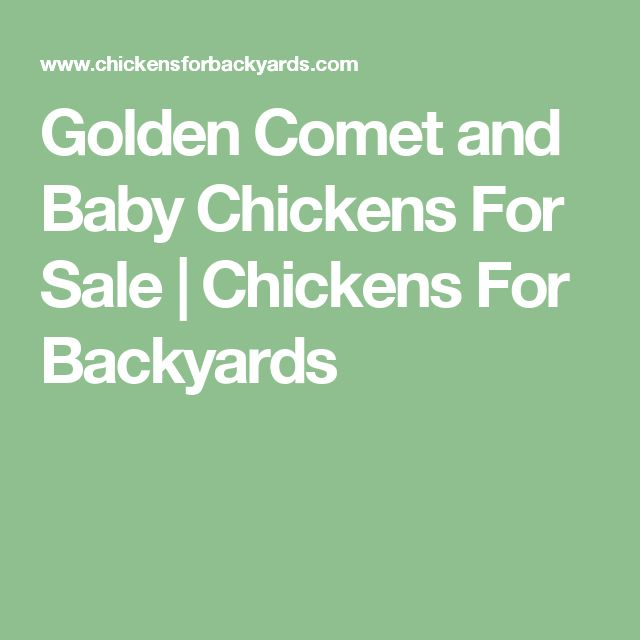 Golden Comet and Baby Chickens For Sale | Chickens For Backyards
