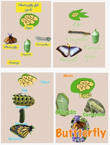 First Grade Workflow and Fluency using Pic Collage app to teach life cycle of butterfly http://langwitches.org/blog/2013/01/31/first-grade-ipad-fluency/