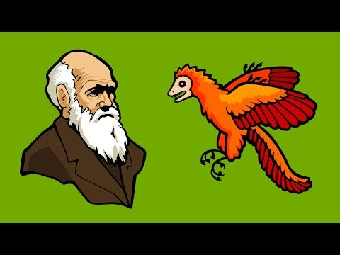 New Animated Web Series Makes the Theory of Evolution Easy to Understand Open Culture