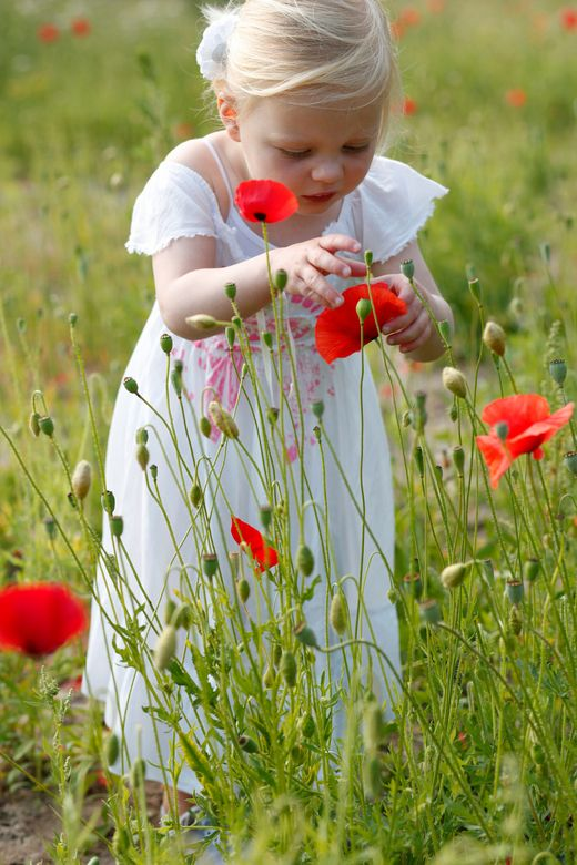 How does the meadow flower its bloom unfold? Because the lovely little flower is free down to its root, and in that freedom bold. ~William Wordsworth