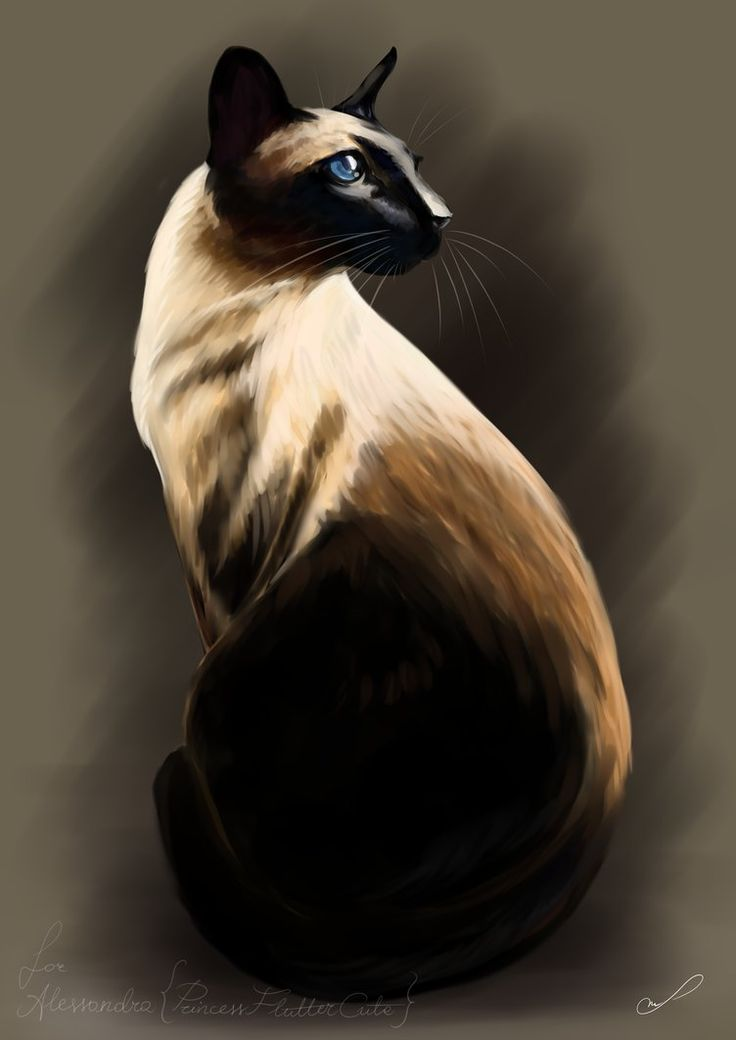 Siamese by Martith.deviantart.com on @DeviantArt
