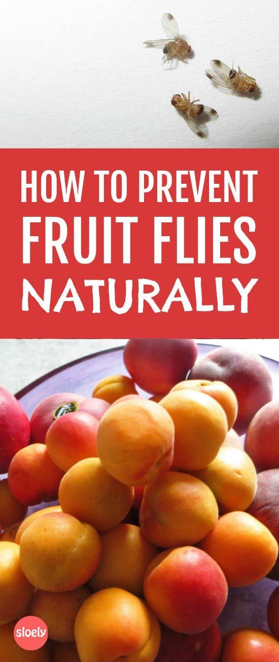 Prevent fruit flies naturally