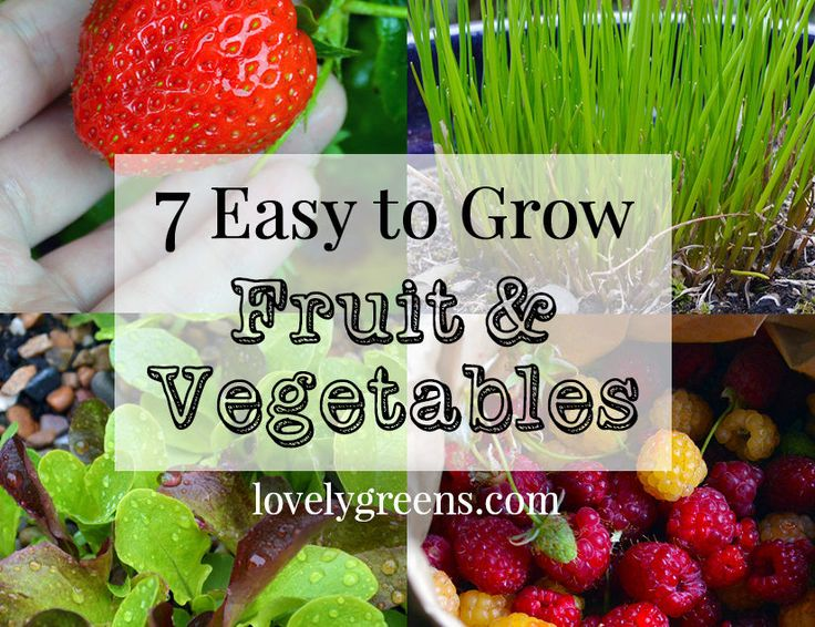 7 Easy-to-grow Fruits & Vegetables and tips to get you started