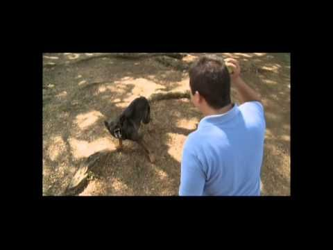 huellas adiestramiento canino - YouTube