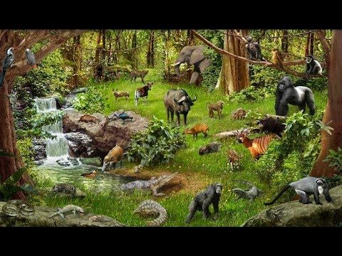 Fascination of nature in harmony with animals and birds life 2017