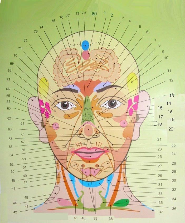 Kompletná mapa tváre: Umiestnenie každej jednej vyrážky na tvári prezradí čo máte v tele choré a čo vás trápi. - TopNaZdravie.sk
