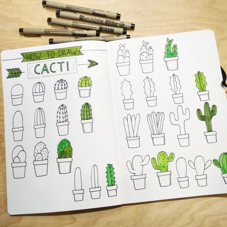 How To Draw A Cactus For The Bullet Journal Bujo Calligraphy Drawing Tutorial Dessin