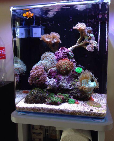 17 best images about fish tanks on pinterest cubes for Aquarium nano marin