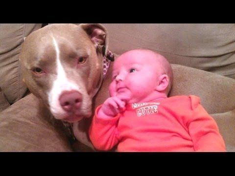 Funny Dogs And Cats Protecting Babies Videos Compilation 2016