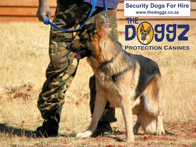 New Dimensions: Security Dogs For Hire
