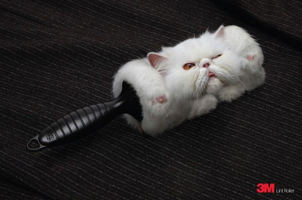 Publicité pour les rouleaux adhésifs pour poils d'animaux par la marque 3M. Top ! #ad
