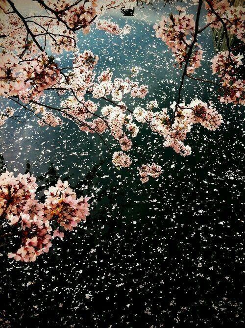 おすすめの桜の名所。超穴場!?都内のオススメスポット4選