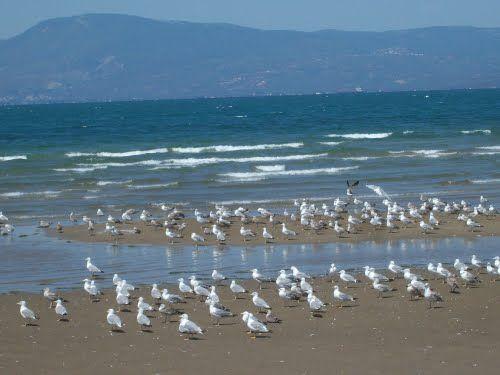 Χαλάρωση στην Αμπωτη - Relaxation at low tide   ΧΑΛΚΙΔΑ - ΛΙΑΝΗ ΑΜΜΟΣ