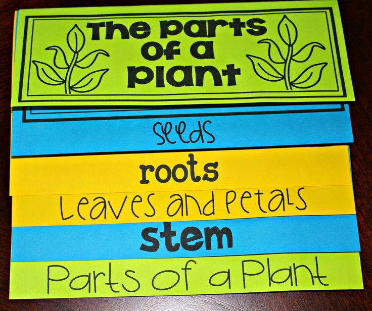 parts of a plant flip up book, print fold and staple