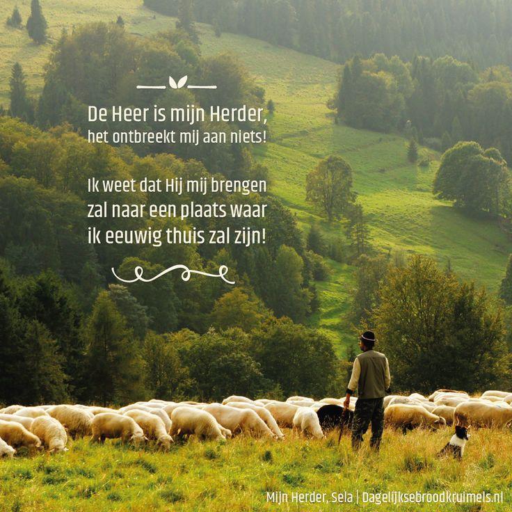 De Heer is mijn Herder,het ontbreekt mij aan niets!Ik weet dat Hij mij brengenzal naar een plaats waarik eeuwig thuis zal zijn! Mijn Herder – Sela  #EeuwigLeven, #Heer, #Herder  http://www.dagelijksebroodkruimels.nl/mijn-herder-sela/