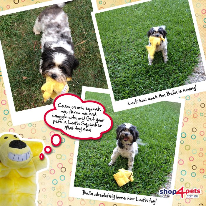 Look how much fun little Bella is having with her Loofa Squeaker Mat toy!   She loves to chew on it, squeak it and snuggle with it at night   Our Loofa Squeaker Mat toys comes with multiple squeakers and a variety of bright colours.  http://www.shop4pets.com.au/squeaker-mat/sf/pl.php?Operation=SetSessionVariable&Variable%5Bviewallfilter%5D=-1&resetisnew=1&resetisspecial=1&resetbrand=1