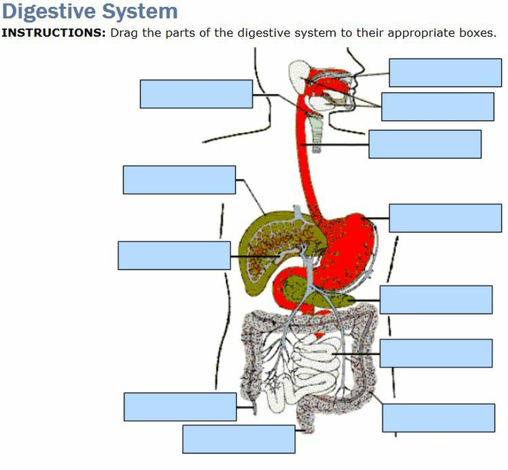 Lose weight without diet and exercise digestive system test digestive system and nutrition quiz 6 online mcqs ccuart Image collections