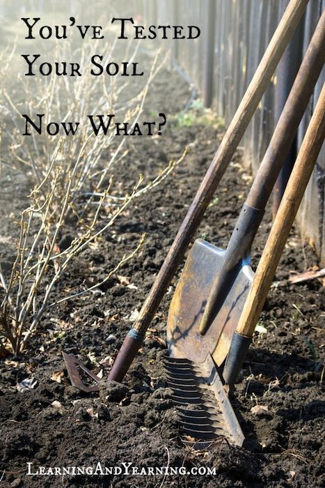You've tested your soil; now what? Amending your soil naturally.: