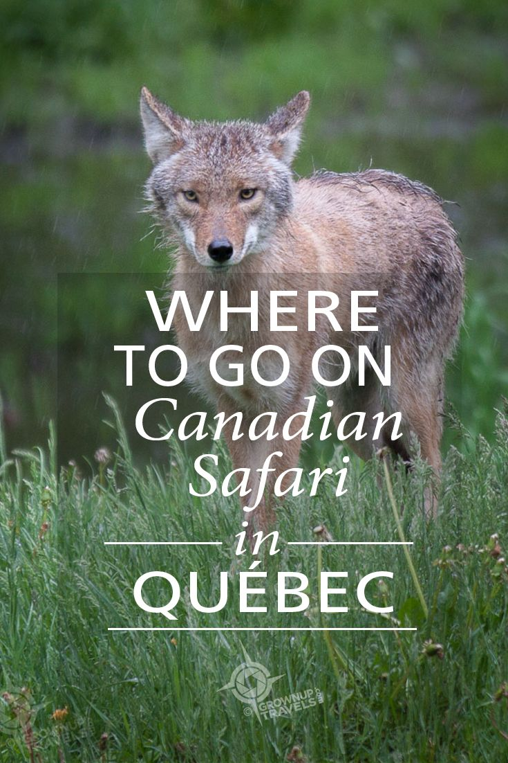 On a Canadian Safari in Parc Omega!