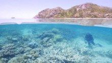 Queensland landholders are planning to clear nearly 70,000 hectares of bush in Great Barrier Reef catchments, according to a conservation group.
