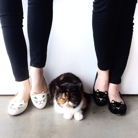 INCY KITTY FLATS | Spotted on @luckymagazine, Do you have a friend who needs these? http://keep.com/incy-kitty-flats-spotted-on-luckymagazine-by-asseenoninstagram/k/zuWxM7ABAl/