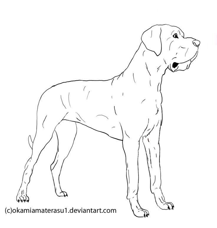 Line drawing of great dame dogs great dane lineart free for Great dane coloring pages