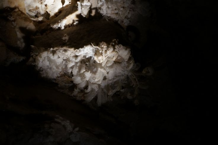 Gypsum: Gypsum crystals often line the walls in dryer sections of caves. At times, these crystals can forms flower like shapes. (Photo: Gypsum flower, Great Onyx Cave, KY)