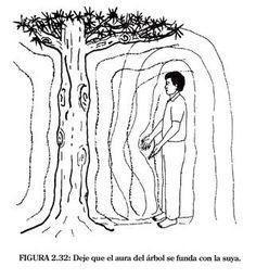 1. Los poderes curativos de los arboles Los Maestros taoístas advirtieron que los arboles son plantas sumamente poderosas. No solo absorbe...