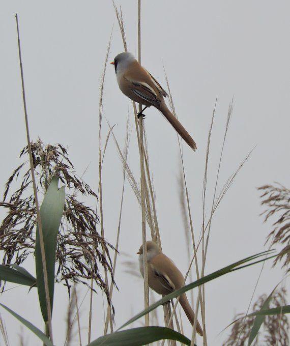 Hortobágy-Halastó - madárka1