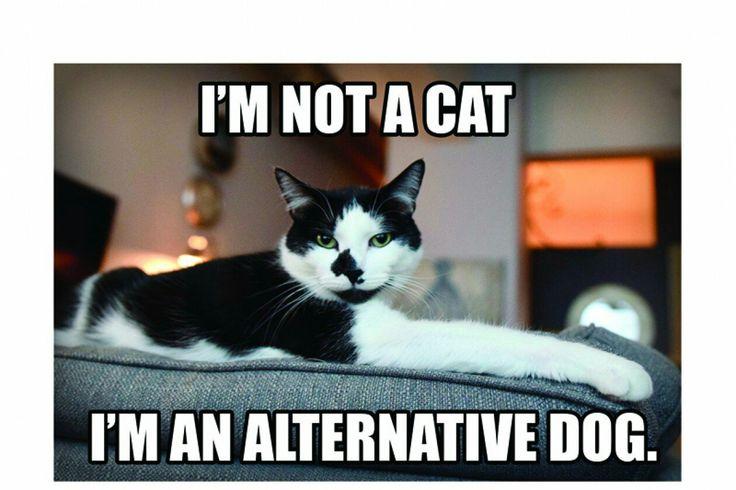 That's an alternative fact, Mr Puss.