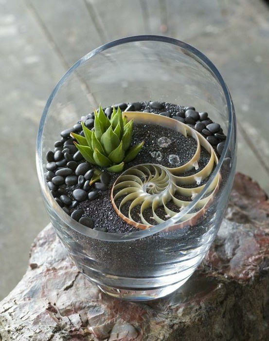 indoor gardening with seashell accent